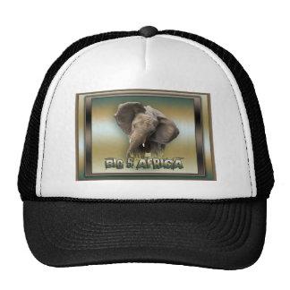 African elephant peak caps & hats