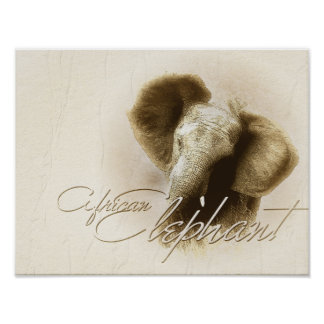 African elephant - PORTFOLIO Posters