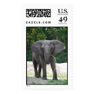 African Elephant Postage Stamps