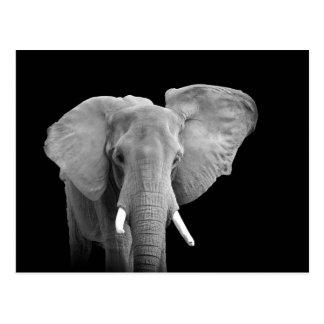 African Elephant - Postcard