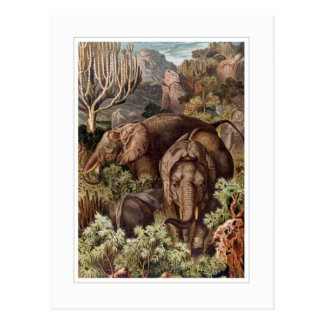 African Elephant Postcards