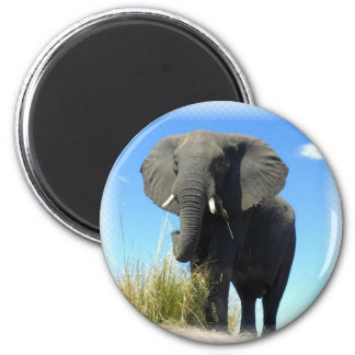 African Elephant Round Magnet