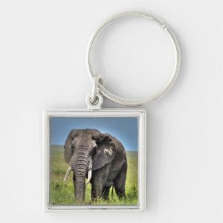 African Elephant & Savannah Grasses Silver-Colored Square Keychain