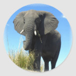 African Elephant Sticker