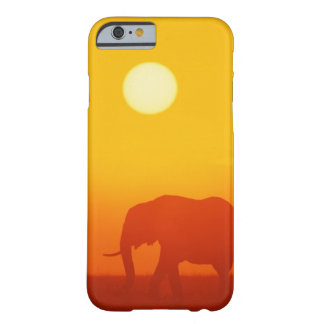 African elephant walking at sunset , Kenya , Barely There iPhone 6 Case