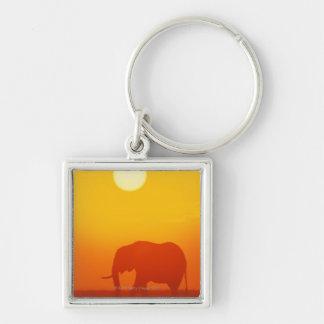 African elephant walking at sunset , Kenya , Keychain