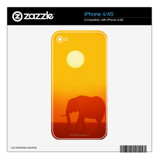 African elephant walking at sunset , Kenya Skins For The iPhone 4