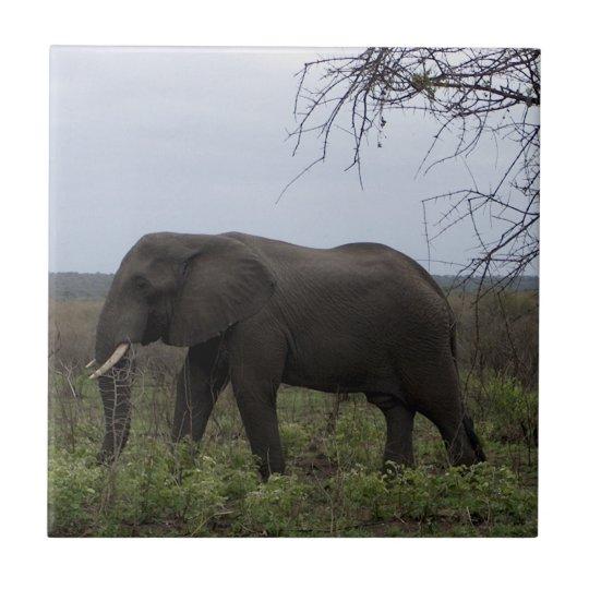 African Elephant Wildlife PhotoTile Tile