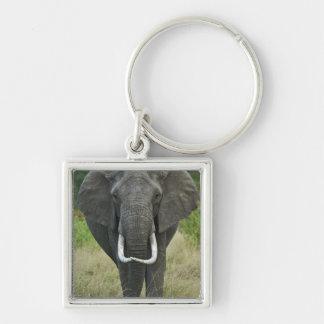 African Elephantna loxodonta, Masai Mara Game Keychain