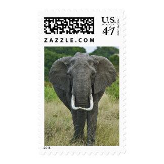African Elephantna loxodonta, Masai Mara Game Postage Stamp