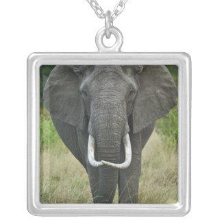 African Elephantna loxodonta, Masai Mara Game Square Pendant Necklace