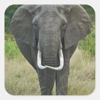 African Elephantna loxodonta, Masai Mara Game Square Sticker