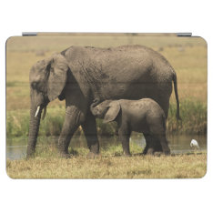 African Elephants At Water Pool Ipad Air Cover at Zazzle