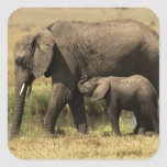 African Elephants at water pool Stickers
