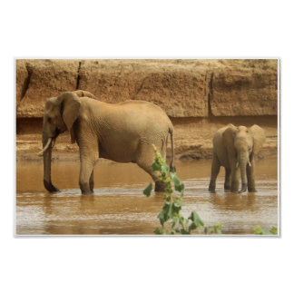African Elephants at Waterhole Africa Poster