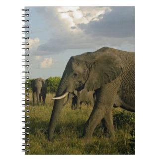 African Elephants grazing, Loxodonta africana, Notebook