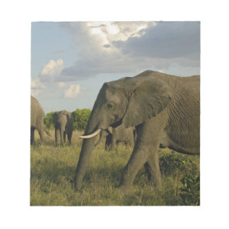 African Elephants grazing, Loxodonta africana, Notepad