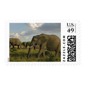 African Elephants grazing, Loxodonta africana, Postage