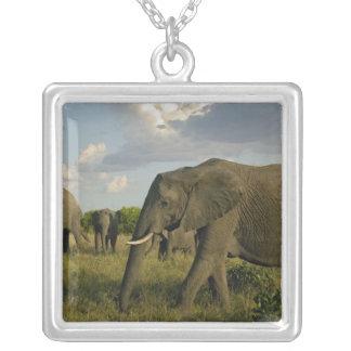 African Elephants grazing, Loxodonta africana, Square Pendant Necklace