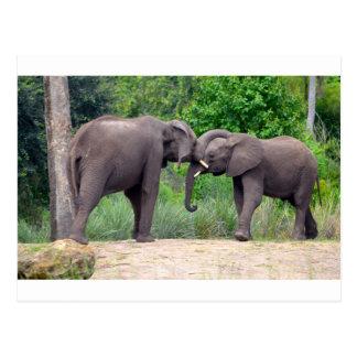 African Elephants Interacting Postcard