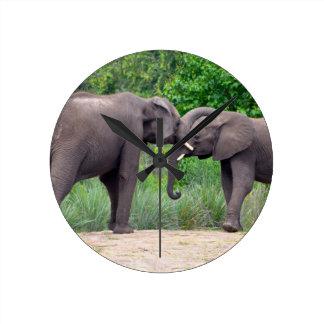 African Elephants Interacting Round Clock