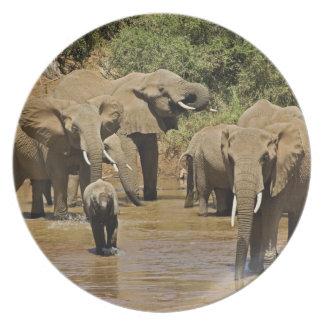 African Elephants, Loxodonta Africana, Samburu Party Plates