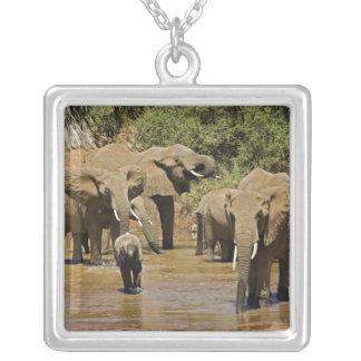 African Elephants, Loxodonta Africana, Samburu Square Pendant Necklace
