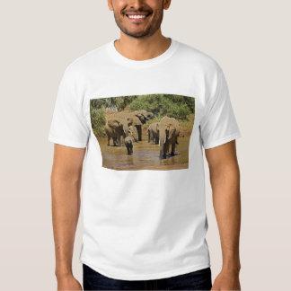 African Elephants, Loxodonta Africana, Samburu Tee Shirt