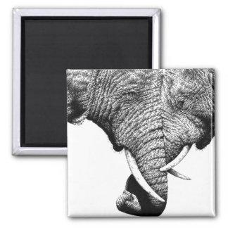 African Elephants Magnet