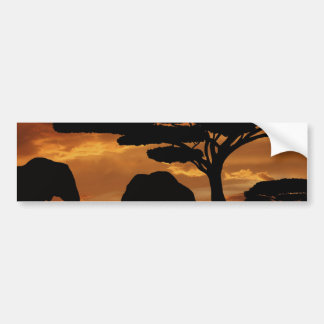 African elephants silhouettes in sunset bumper sticker