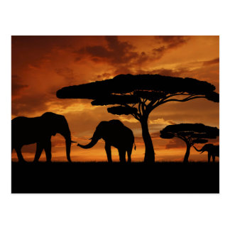 African elephants silhouettes in sunset postcard