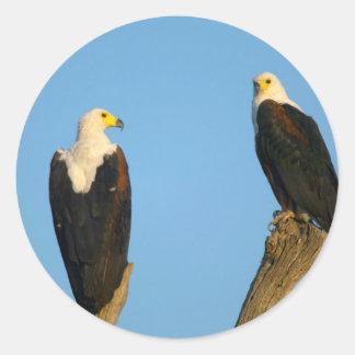 African Fish Eagle (Haliaeetus Vocifer) Classic Round Sticker