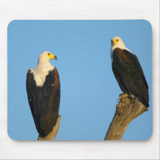 African Fish Eagle (Haliaeetus Vocifer) Mouse Pad
