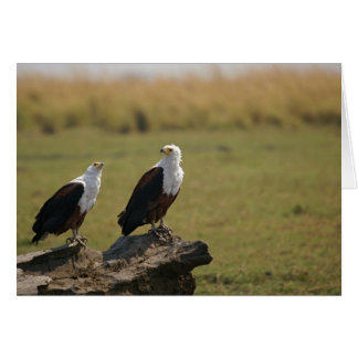 African Fish Eagles Greeting Card