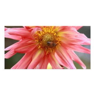 African Flower 04 Photo Card