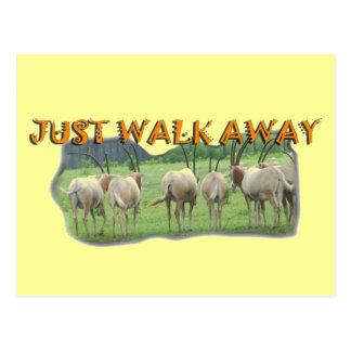 African Gazelles Just Walk Away Postcard