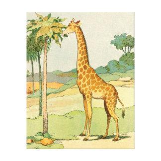 African Giraffe Eating Acacia Leaves Canvas Prints