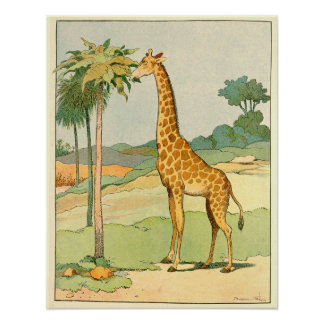 African Giraffe Eating Acacia Leaves Poster