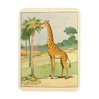 African Giraffe Eating Acacia Leaves Rectangular Photo Magnet
