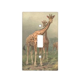African giraffe in the savanna. light switch plates