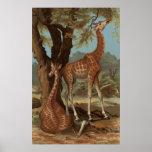 African Giraffe Poster