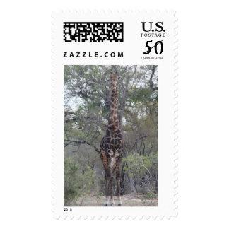 African Giraffe Standing Tall Postage