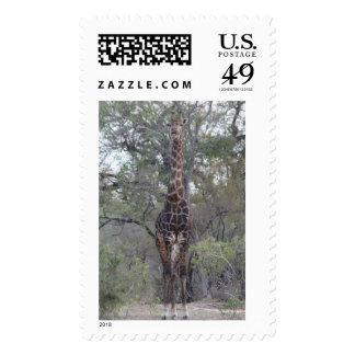 African Giraffe Standing Tall Postage Stamp