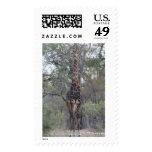 African Giraffe Standing Tall Stamps