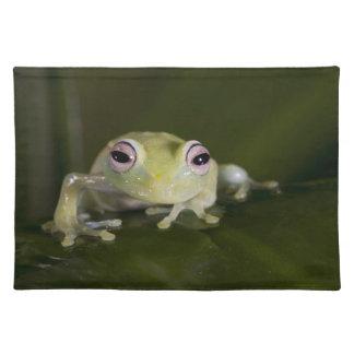 African Glass Frog, Hyperolius viridiflavus, Placemat