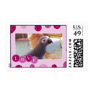 African Gray Love Stamps