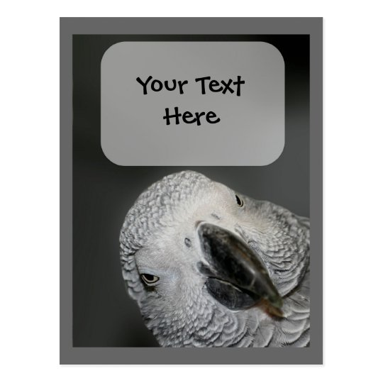 African Gray Parrot Face Animal Postcard