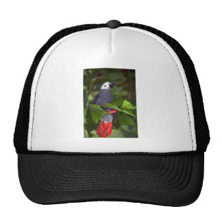 African gray parrot hats