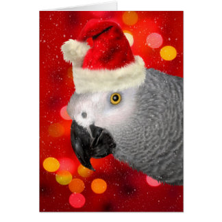 African Gray Parrot in a Santa Hat Blank Card