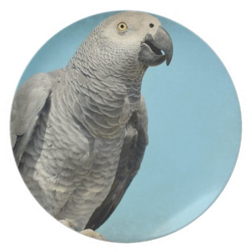 African gray parrot plate